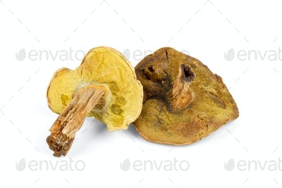 Two dried mushrooms