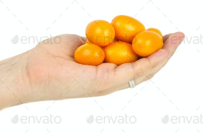 Hand holding few kumquat fruits