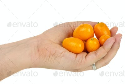 Hand holding some kumquat fruits