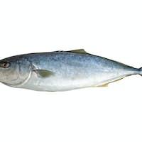 Single tuna fish