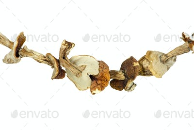 Dried cepe mushrooms on the rope