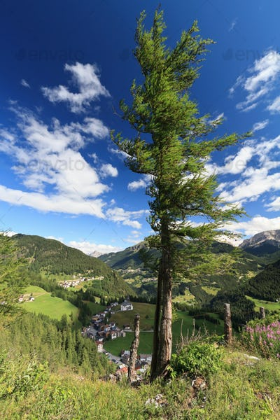 tree over Cordevole valley