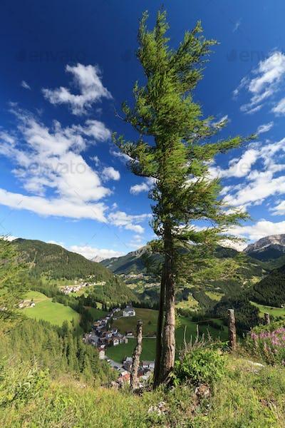 tree over Cordevole valley