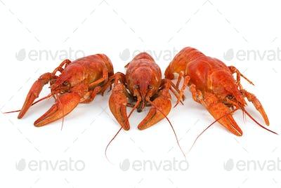 Three boiled crawfishes