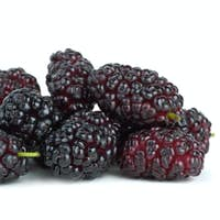 Few mulberries