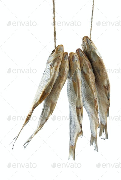 Five dried sea roach fishes on the rope