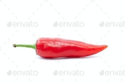 SIngle red chili pepper
