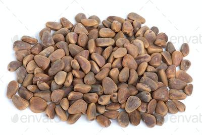 Pile of cedar nuts