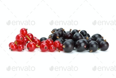 Some blackcurrants and redcurrants berries
