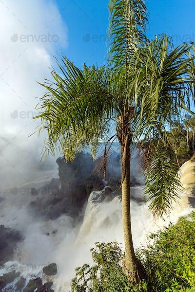 Palm tree and waterfall