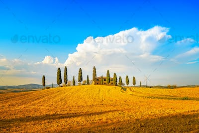 Tuscany, farmland, cypress trees and white road. Siena, Val d Or