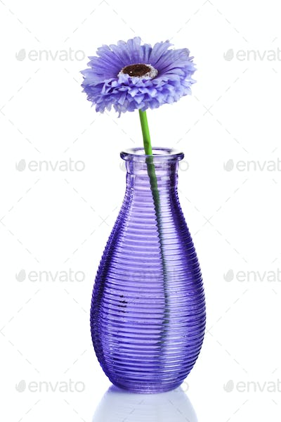 Blue flower in vase isolated on white
