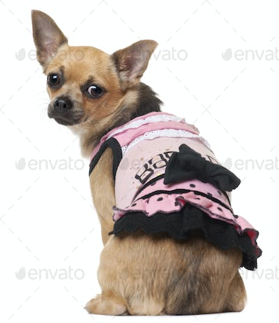 Chihuahua in pink dress, 12 months old, sitting in front of white background