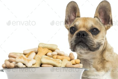 Close up of a French Bulldog, standing behind of a full dog bowl, isolated on white