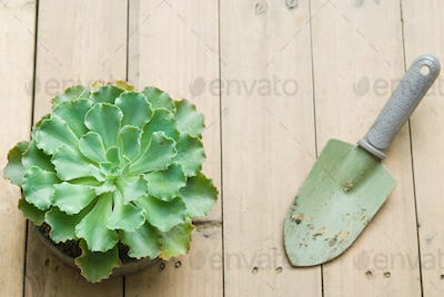 Succulent and shovel