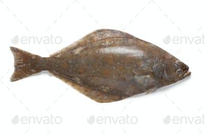 Fresh halibut fish