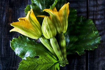 Picked From The Garden, Zucchini Flowers