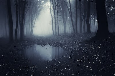Dark forest with fog and pond