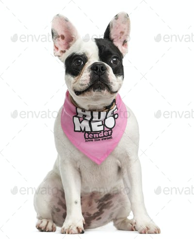 French Bulldog puppy wearing a pink bandana sitting, 6 months old, isolated on white