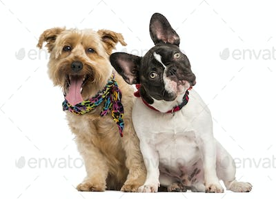French Bulldog and crossbreed dog sitting next to each other, isolated on white
