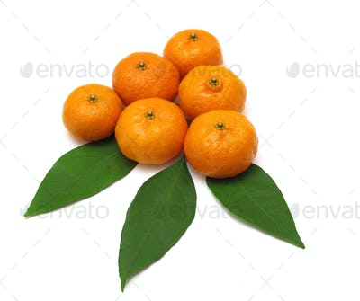 Ripe tangerines or mandarin with leaf isolated on white backgrou