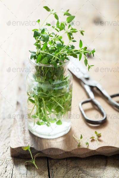 fresh thyme herb in glass