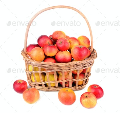 Apples in basket