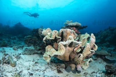Cup coral reef