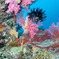 Beautiful pink tropical reef