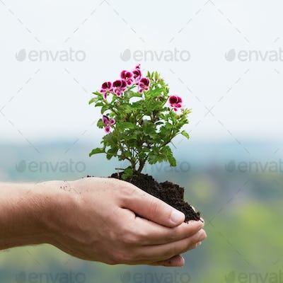 Flower in palm