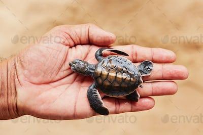 Newborn of turtle