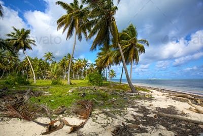 Untouched palm beach