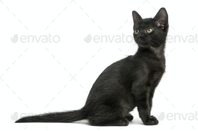 Side view of a Black kitten sitting, looking back, 2 months old, isolated on white