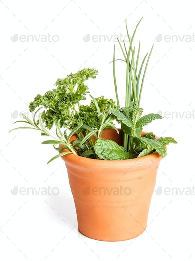 Fresh different herbs