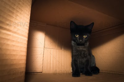 kitten in a box