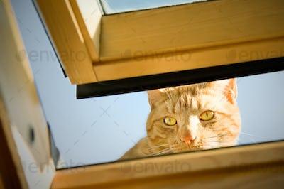 cheeky tom cat