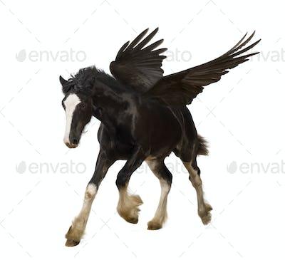 Winged stallion (Pegasus) galloping