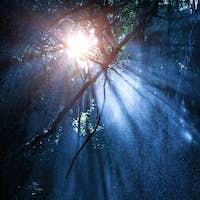 Mystery rainforest