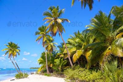 Caribbean sand beach