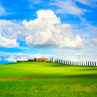 Tuscany, farmland, cypress trees row and field. Siena, Val d Orc