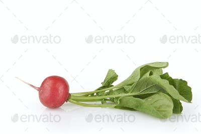 Small garden radish with leaves isolated