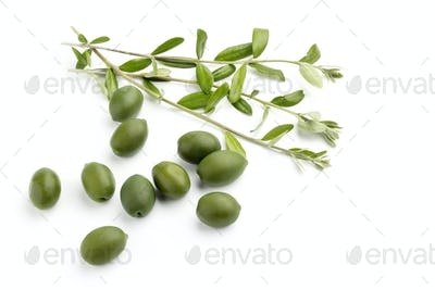 green olives with olive branch