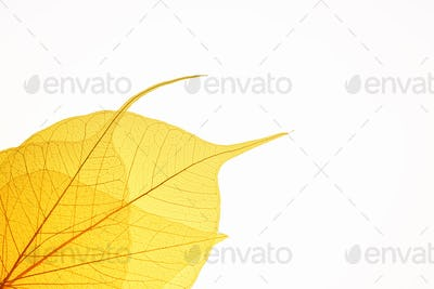 yellow leaf vein background