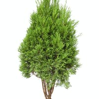 small tree isolated