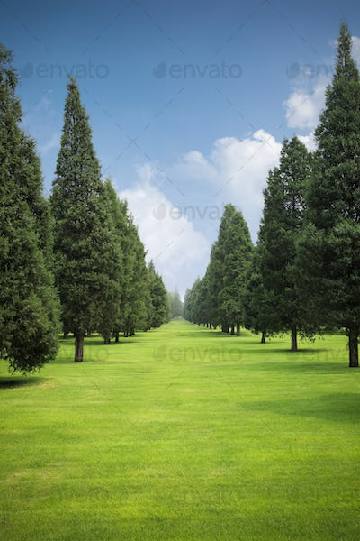 lawn and trees in park