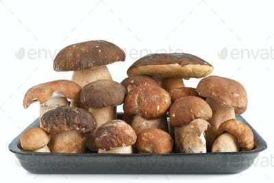 tray with Boletus mushrooms