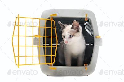 kitten in pet carrier