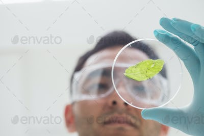 Close-up low angle view of a scientist analyzing a leaf at the laboratory