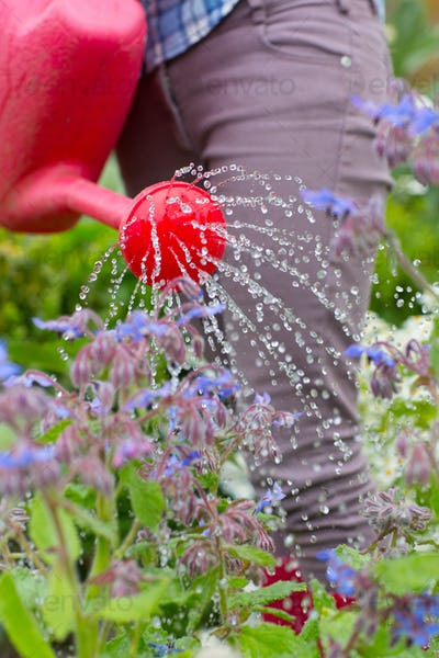 Woman watering her flower bed with red watering can in her garder
