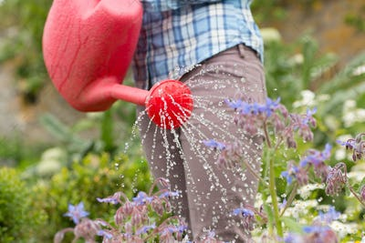 Woman watering her flowers with red watering can in her garden